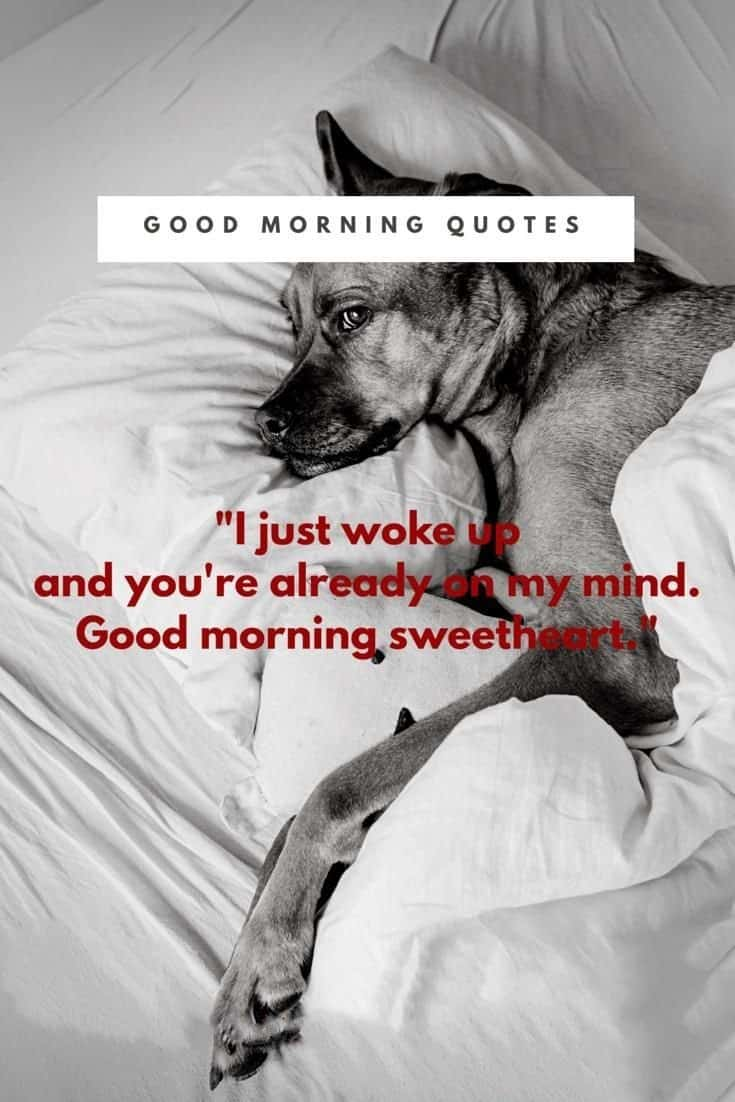 58 Good Morning Memes and Good Morning Quotes With Images 25