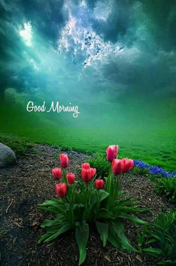 31 Good Morning Greetings Pictures And Wishes With Beautiful Images 2