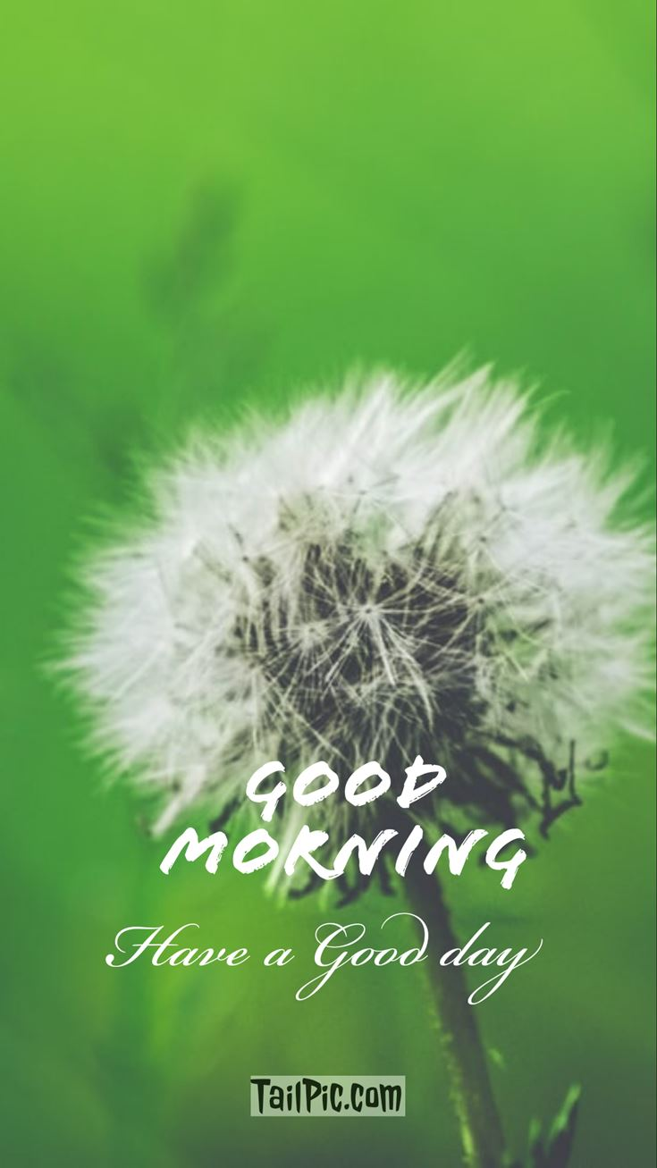 Good Morning Pictures 1