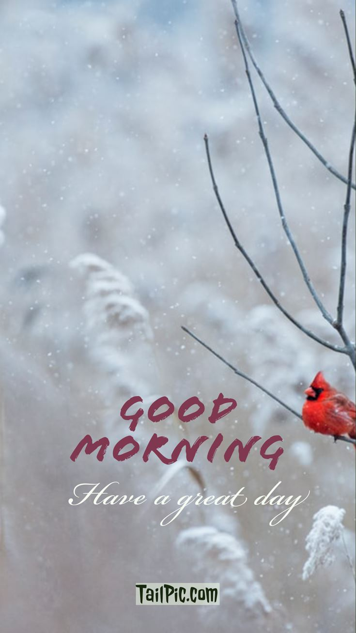 Good Morning Pictures 20