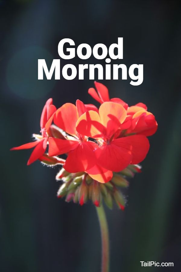 beautiful good morning flowers images