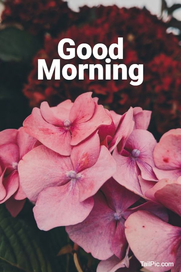 beautiful good morning flowers image