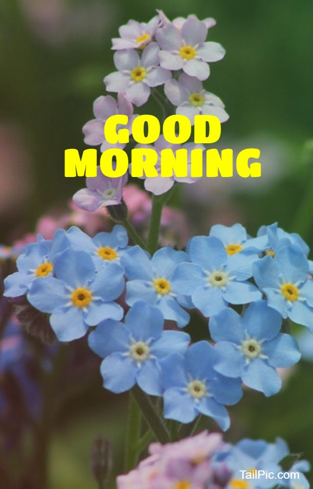 cool good morning flowers image