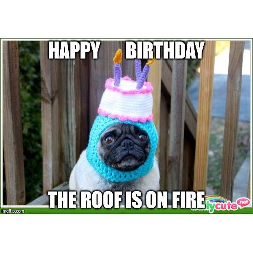 Funny Happy Birthday Memes That Will Render You Wishes 31