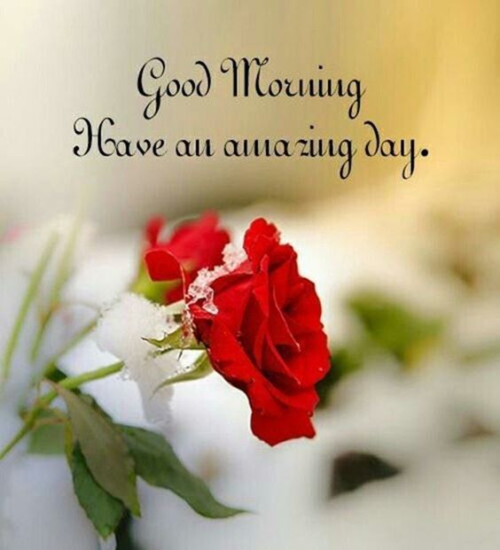 best good morning greetings images Wishes messages 39