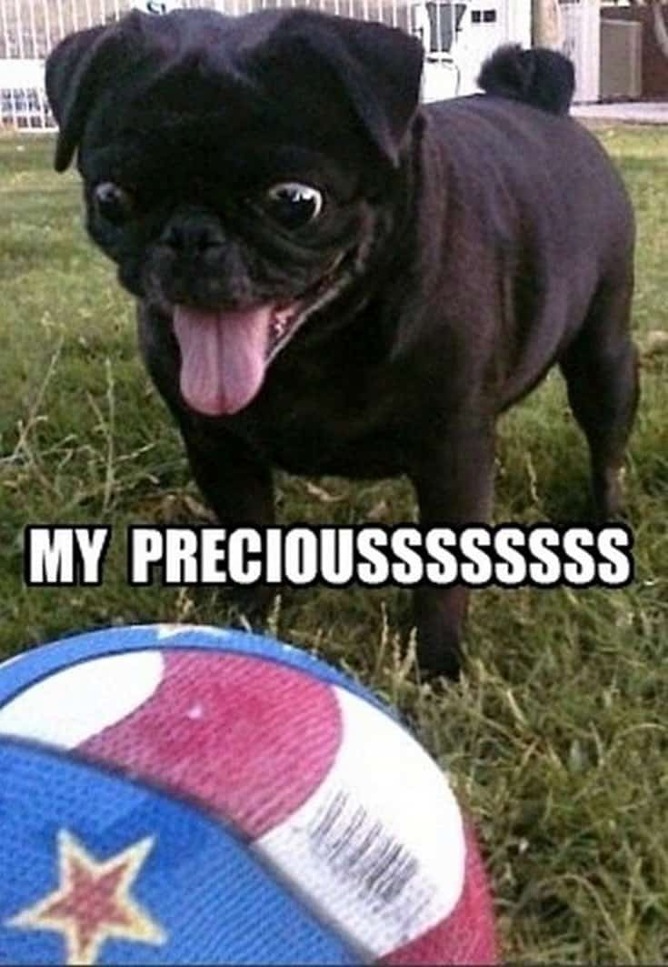 35 Cool funny animal memes funny animals pictures 34