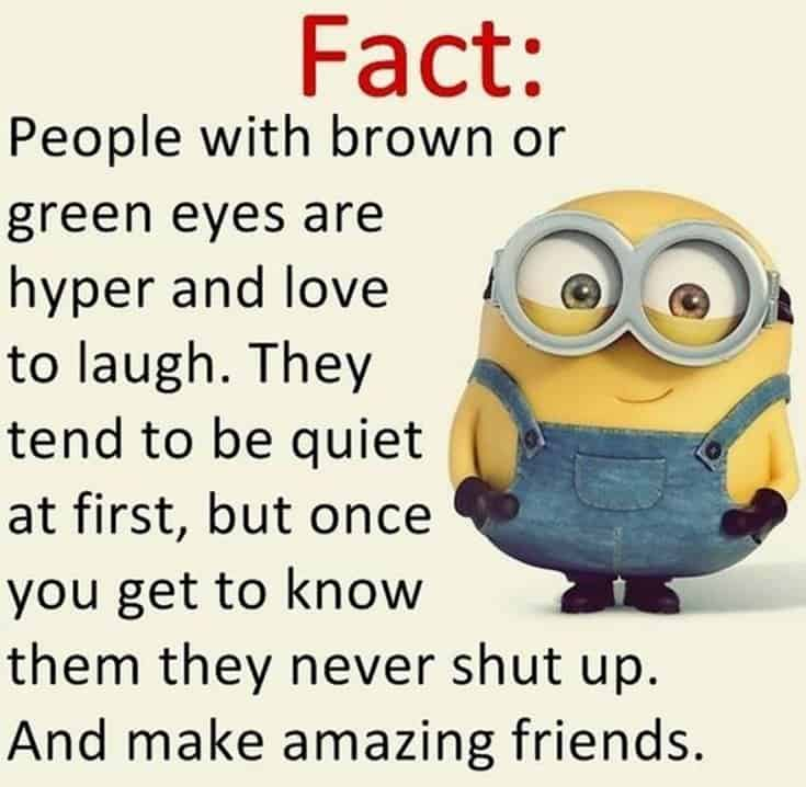 59 Funny Minions Picture Quotes Funny Memes 12