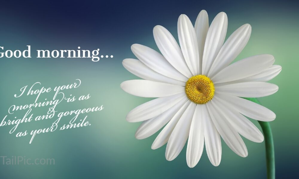 31 Good Morning Greetings Pictures And Wishes With