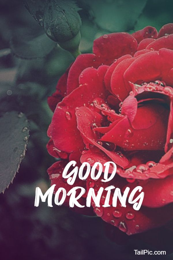 best good morning flowers images