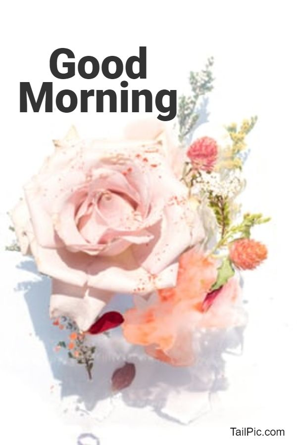 good morning flowers message
