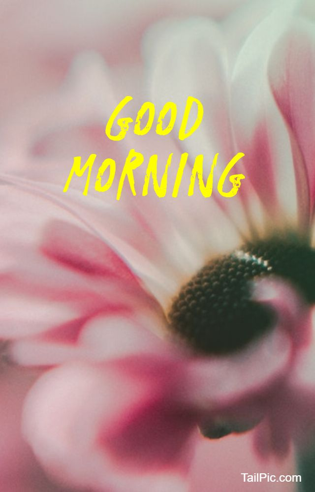 best good morning flowers image