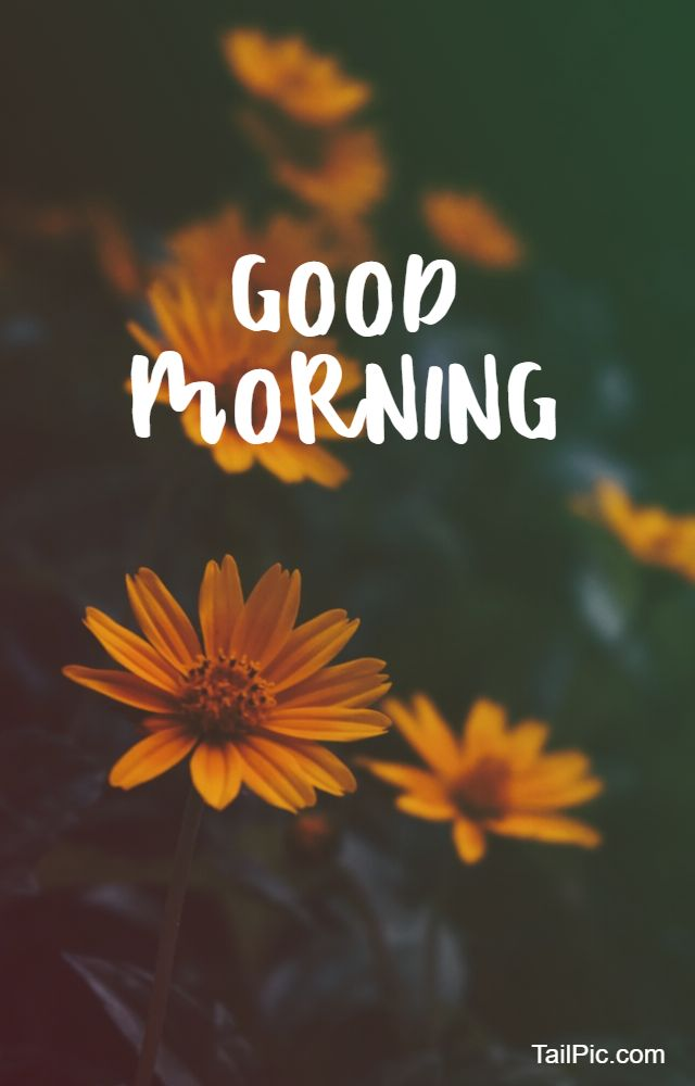 images of good morning flowers