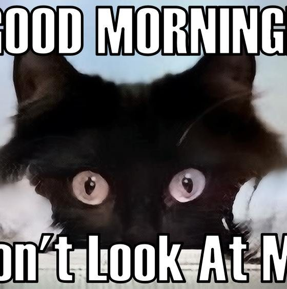 good morning memes and images