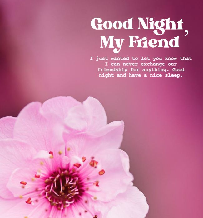 funny good night messages for friends 1