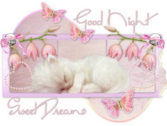 funny good night photo