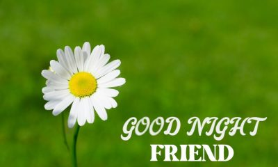 good night messages for friends quotes with images