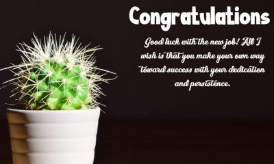 Congratulation Messages For New Job The Best Collection Wishes Quotes